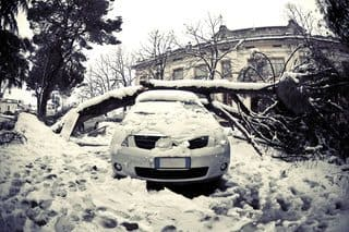 tree on car in snow