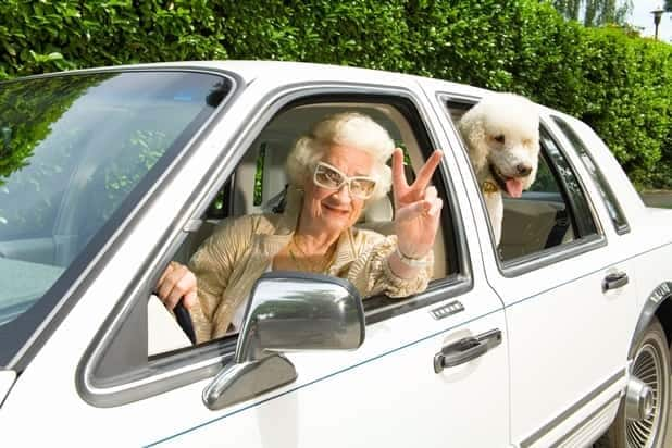 Senior Woman In Car With Poodle