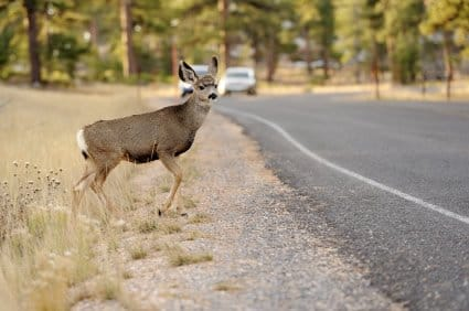 Will car insurance cover the damage if I hit a deer